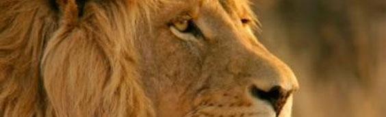 Mac OS X Lion培训发布