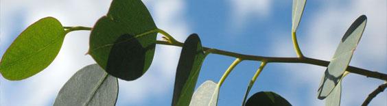 Eucalyptus云计算培训课程