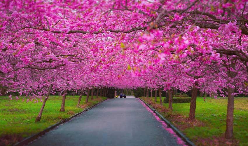 spring_850x500